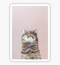 Beautiful cat looking up Sticker