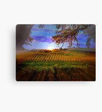 Colorful Fall Vineyard Canvas Print