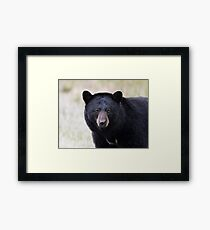 Staring bear Framed Print