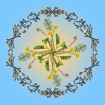 Staithes - wild flower mandala by mariasilmon