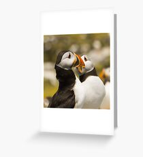 Puffin connection Greeting Card