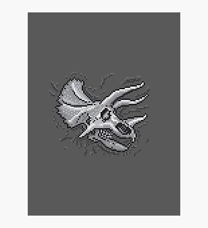 Pixkull - Triceratops  Photographic Print