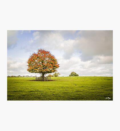 Stud Tree Photographic Print