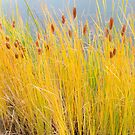 Colorful Autumn Cattails by Bo Insogna