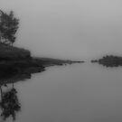 Fog & Mirrors by Shari Galiardi