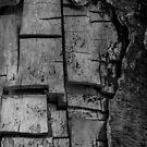 Puzzled Bark by Shari Galiardi