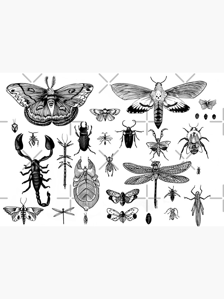 Bug Board by aimeecozza