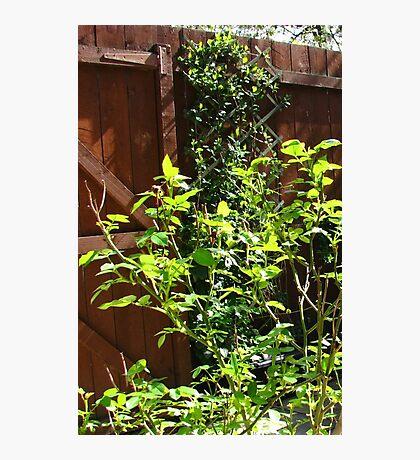 The Magic of Sunshine - Rose and Honeyscukle Leaves Fotodruck