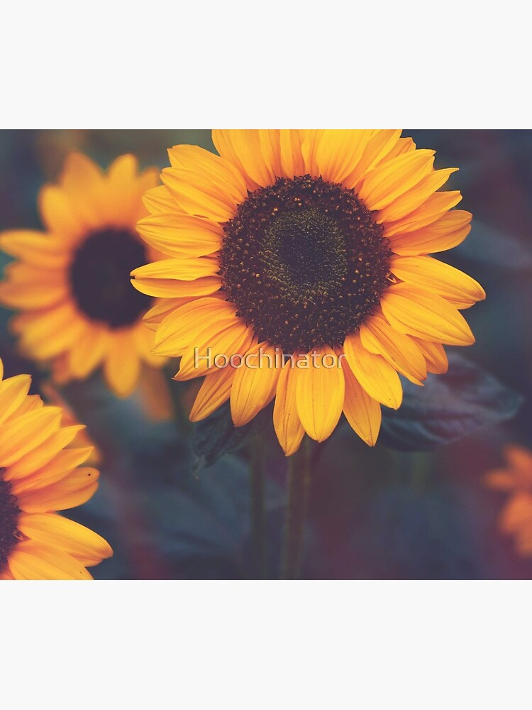 Sunflower by Hoochinator