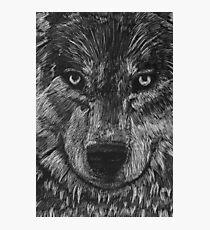 Portrait: Lone Wolf Photographic Print
