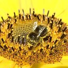 Bee on Sunflower by Kawka