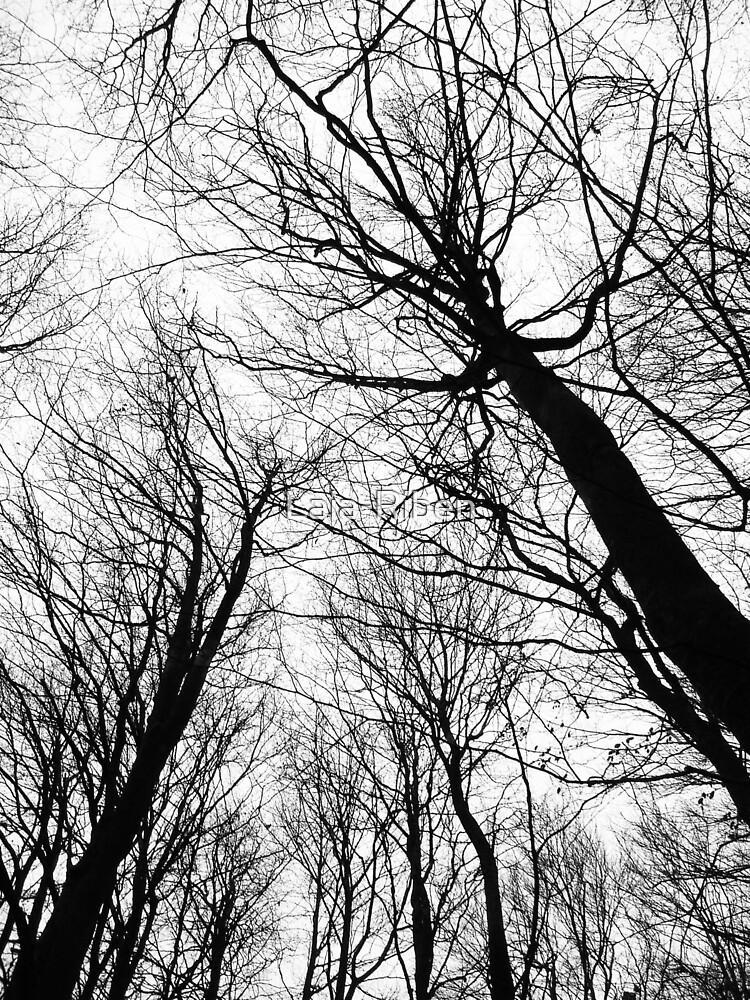 Branches White - Branches white by Laia-Riben