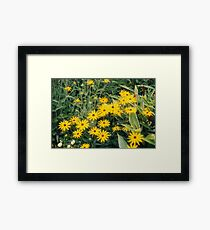 Yellow Starlike Flowers Framed Print