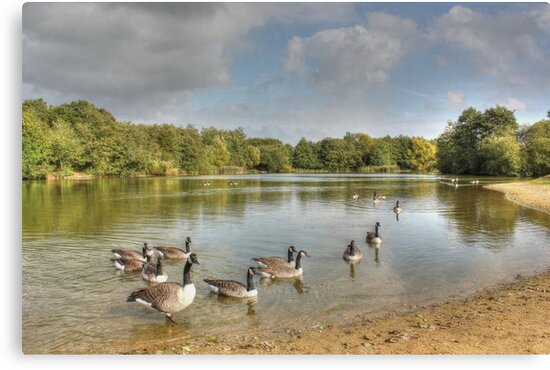 Geese on the Lake HDR by Vicki Spindler (VHS Photography)