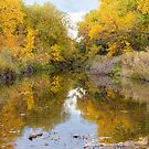 Fly Fishing Stream Reflections by Bo Insogna