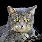 Royal Kitty Kat  by Heather Friedman