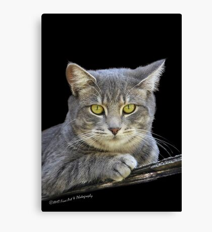 Royal Kitty Kat  Canvas Print