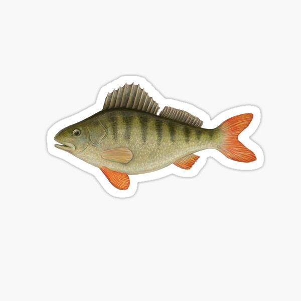 Freshwater Perch  Sticker