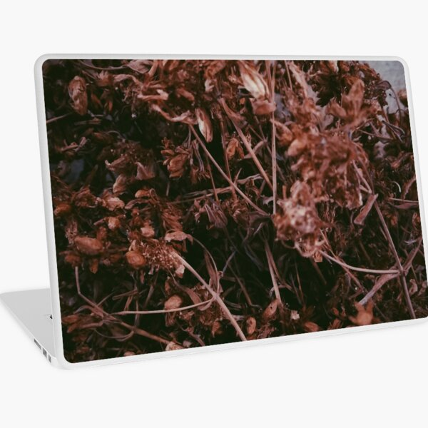 Dry Flowers In The Attic Laptop Skin