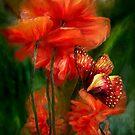 Poppy Art Collection 1 Calendar by Carol  Cavalaris