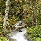 Tumbling Autumn Stream by Jim Stiles