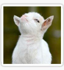 Smug Goat Sticker Sticker