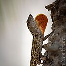 Brown Anole by anorth7
