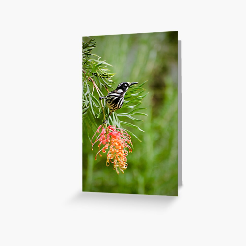 Finding Nectar - New Holland Honeyeater Greeting Card
