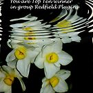 banner for group redfield by loiteke