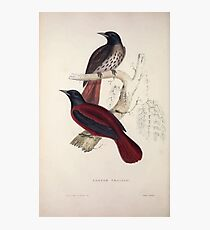 John Gould A Century of Birds from the Himalaya Mountains 1831 035 Pastor Traillii Photographic Print