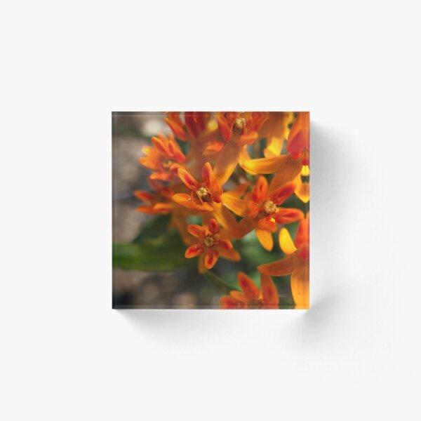 Summer Orange Acrylic Block