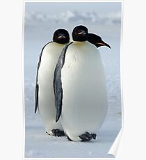 Emperor Penguins Huddled Poster