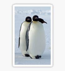 Emperor Penguins Huddled Sticker