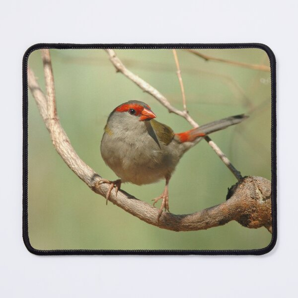 Red-browed Finch Mouse Pad