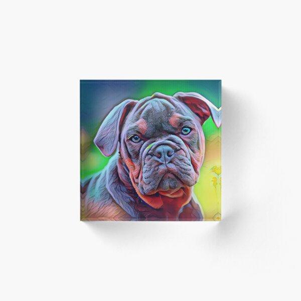Cute Bull dog Oil painting Acrylic Block
