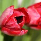 Lipstick Red... by Terri~Lynn Bealle