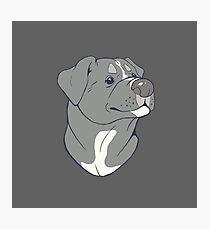Pit bull Pride-Blue Photographic Print