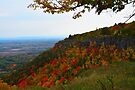 Escarpment Foliage by John Schneider