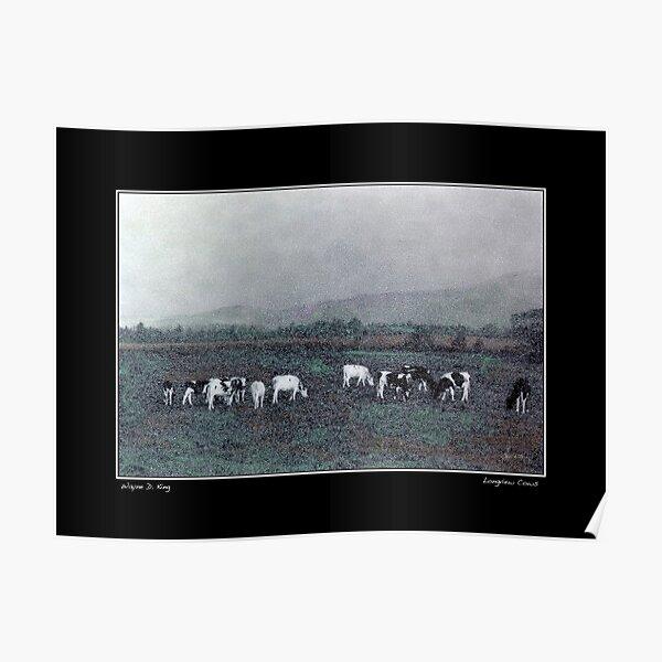 Longview Cows Poster Poster