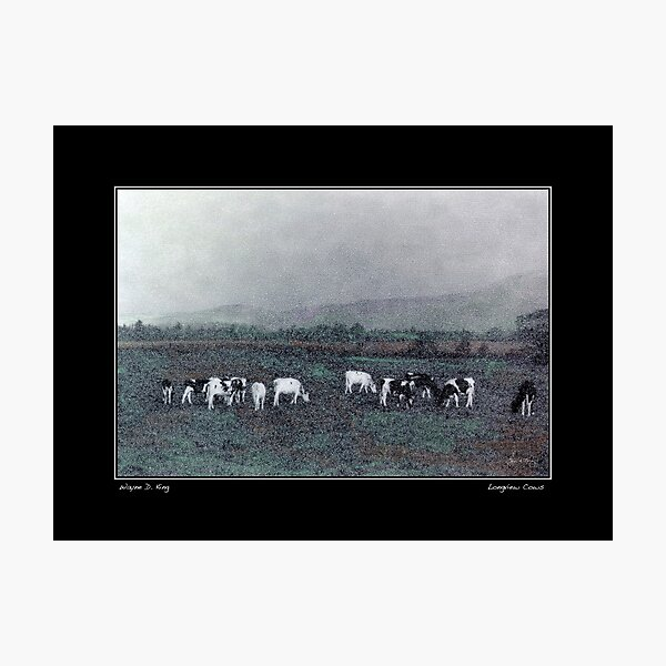 Longview Cows Poster Photographic Print