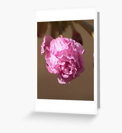 Love in the Sunlight Greeting Card