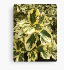 Green Washington leaves Canvas Print