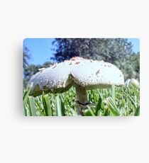 Mushroom In the Grass Metal Print