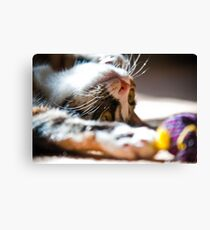 Cat Toy Canvas Print