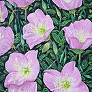 Pink Evening Primrose by Beth Alcala