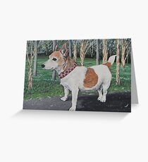 Elle the jack russell  Greeting Card