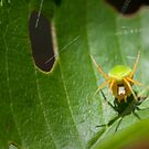 Incy Wincy Spider by Mark Elshout