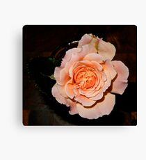 JUST PHOTOS ~ FLORAL ~ D1G1TAL-M00DZ ~ Rose Opening by tasmanianartist Canvas Print