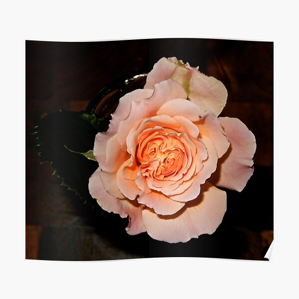 JUST PHOTOS ~ FLORAL ~ D1G1TAL-M00DZ ~ Rose Opening by tasmanianartist Poster