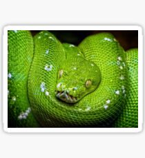 Green Snake Sticker